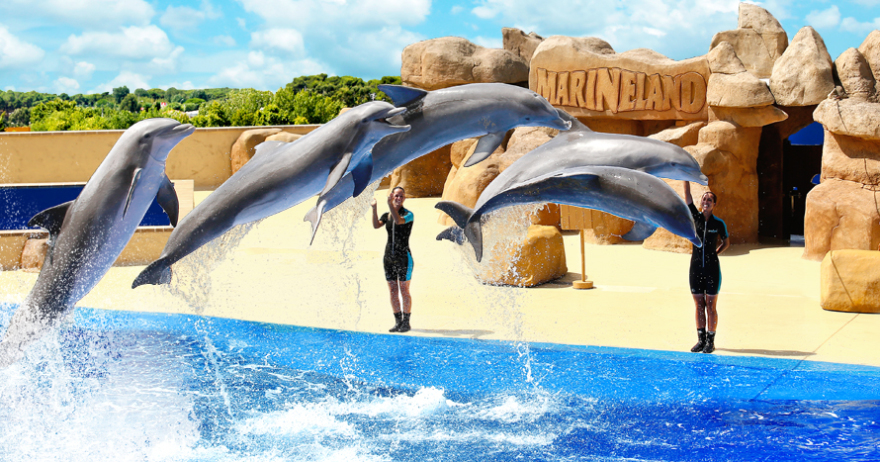 Summer Camp go to Marineland